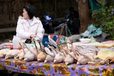 kippen op de markt in Luang Prabang